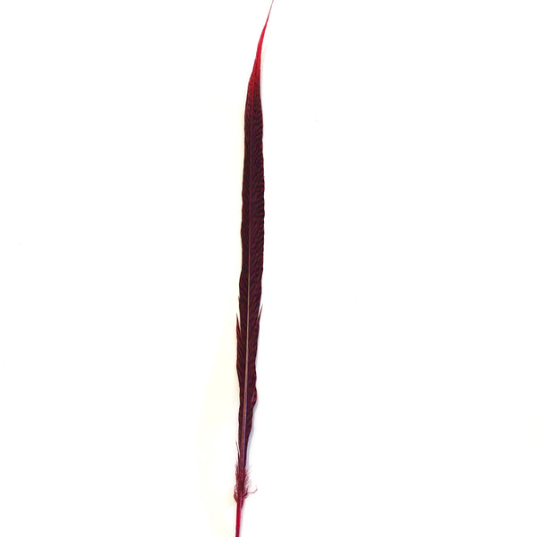 "20"" to 30"" Golden Pheasant Side Tail Feather - Red"