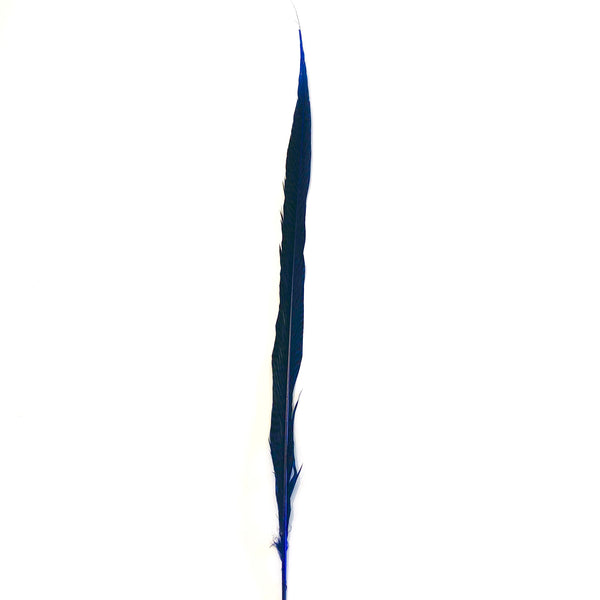 "20"" to 30"" Golden Pheasant Side Tail Feather - Royal Blue"