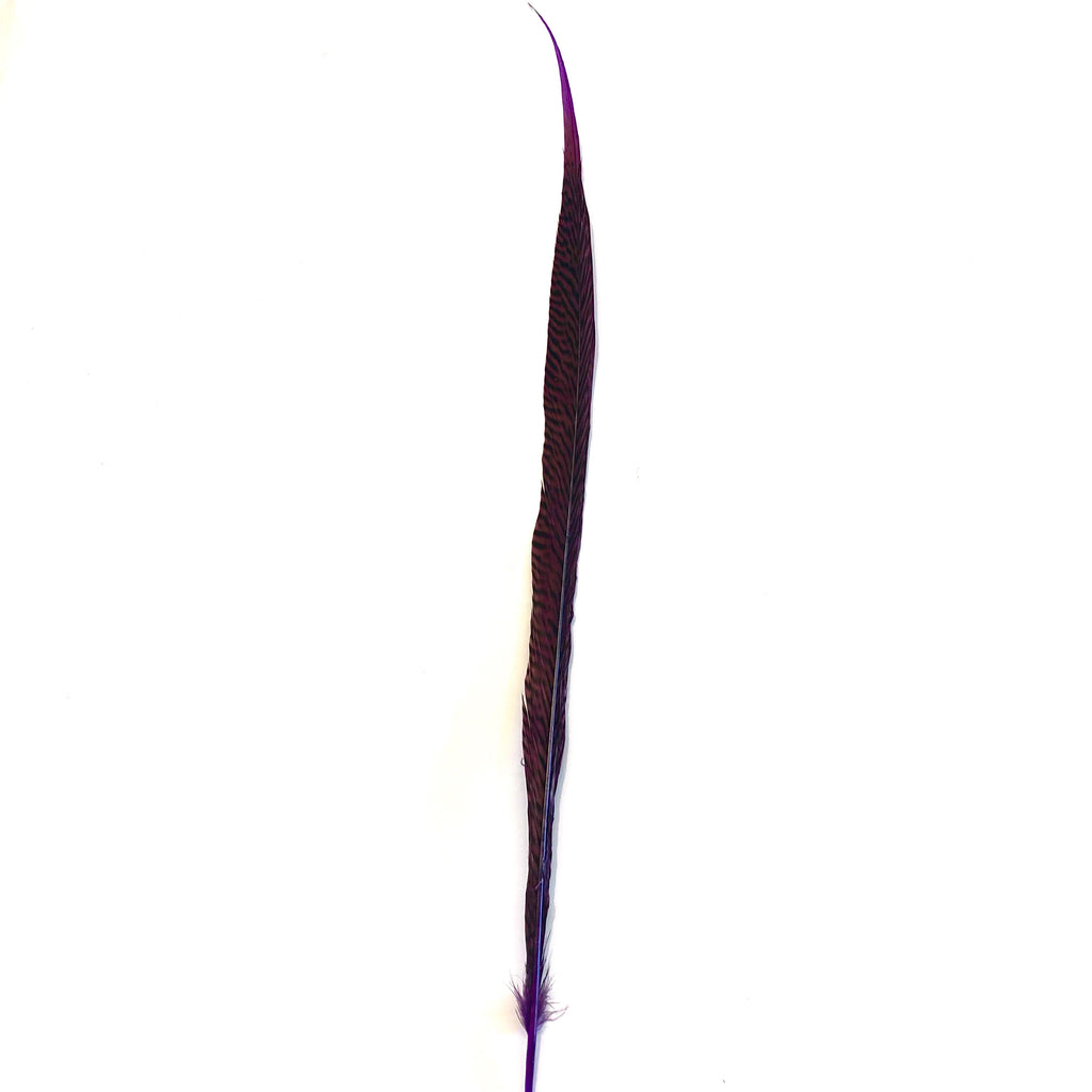 "20"" to 30"" Golden Pheasant Side Tail Feather - Purple ((SECONDS))"