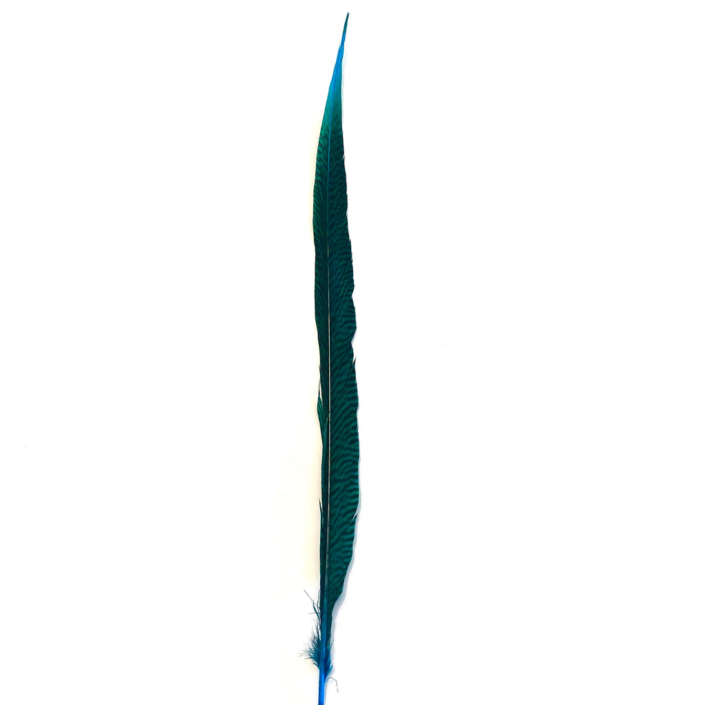 "10"" to 20"" Golden Pheasant Side Tail Feather - Turquoise ((SECONDS))"