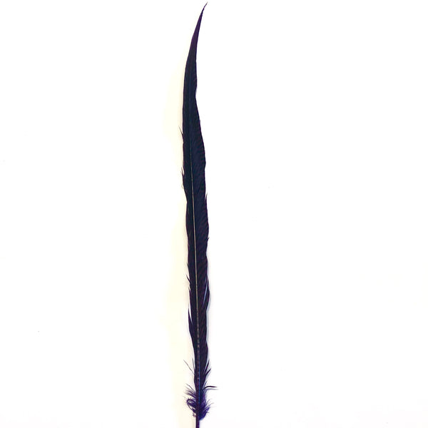 "20"" to 30"" Golden Pheasant Side Tail Feather - Eggplant ((SECONDS))"