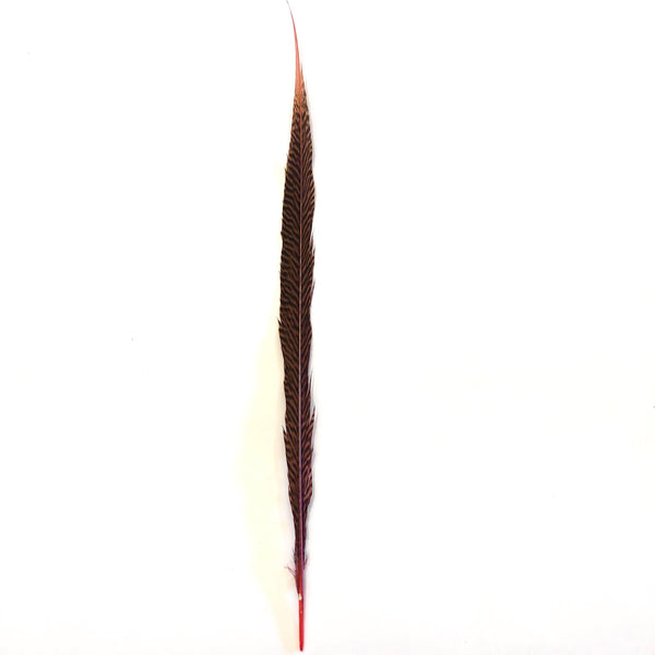 "20"" to 30"" Golden Pheasant Side Tail Feather - Dusty Pink ((SECONDS))"