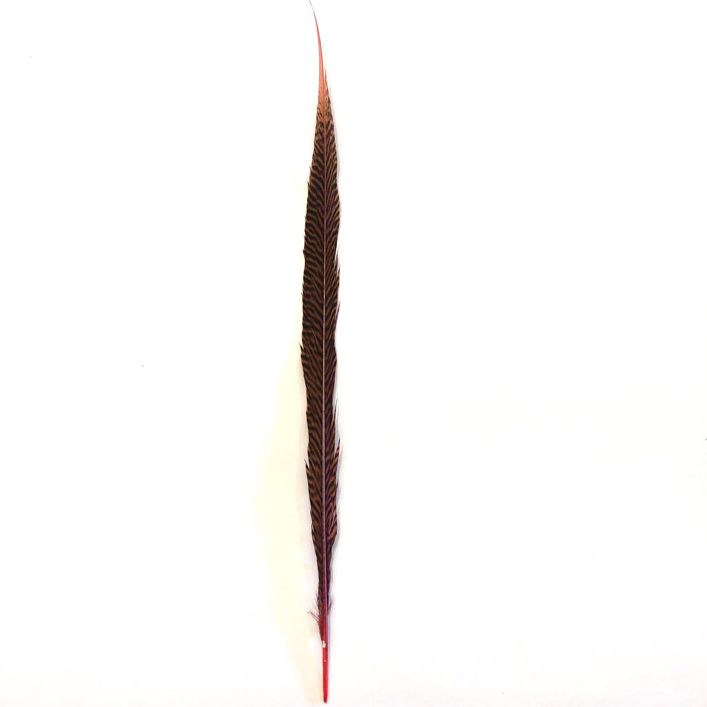 "10"" to 20"" Golden Pheasant Side Tail Feather - Dusty Pink ((SECONDS))"