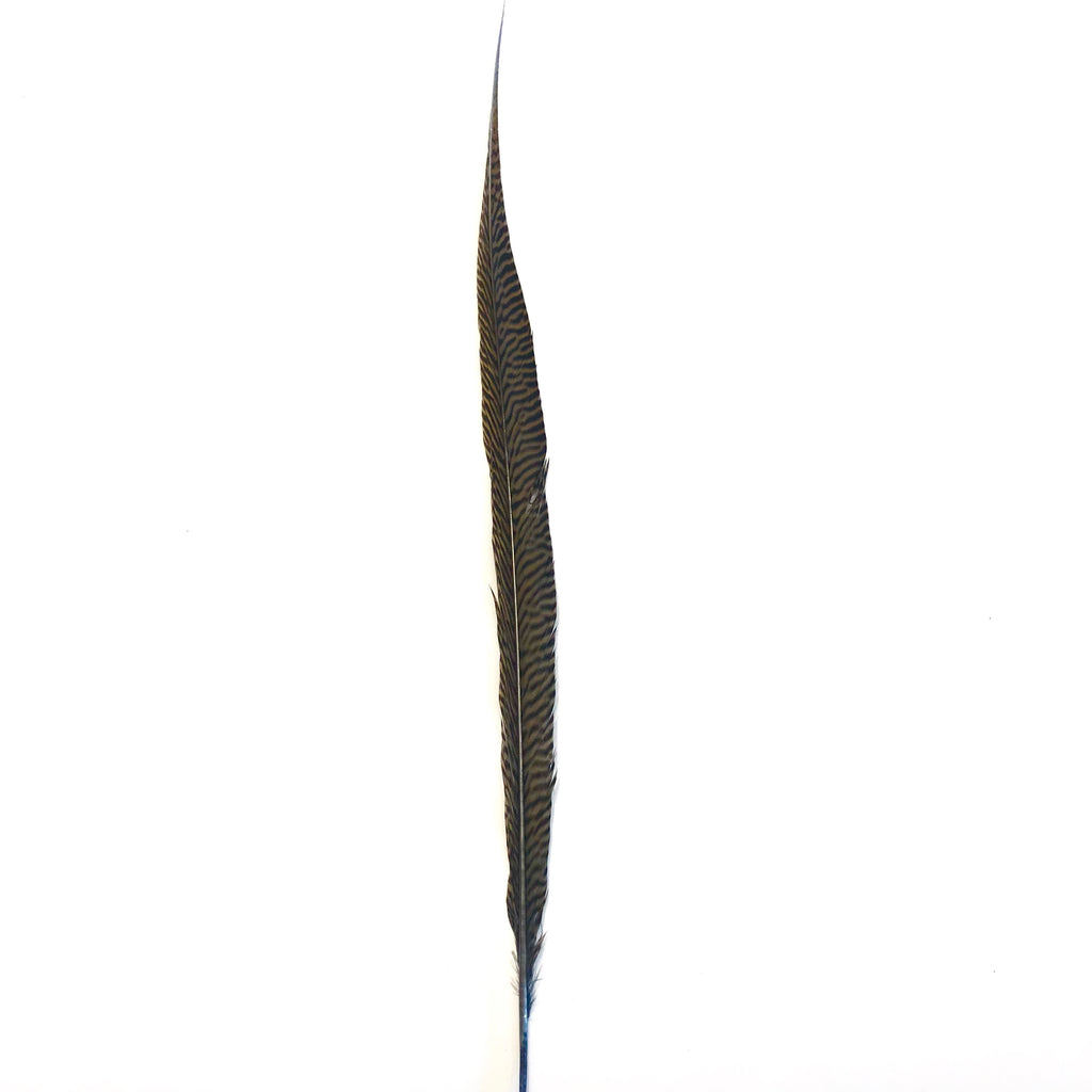 "20"" to 30"" Golden Pheasant Side Tail Feather - Grey"