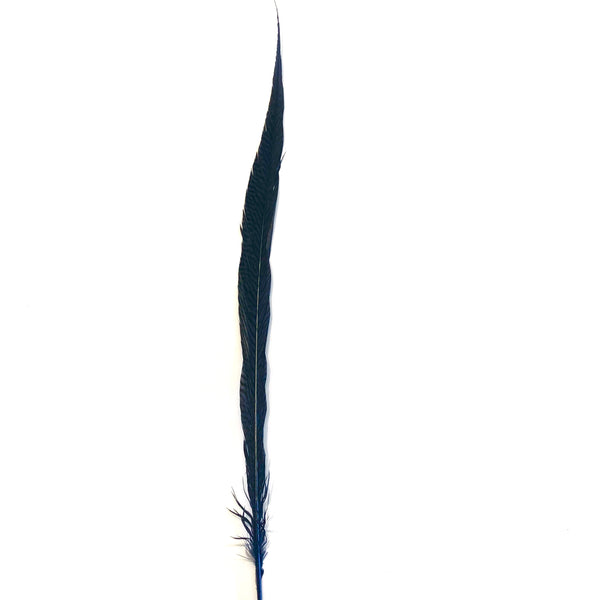 "20"" to 30"" Golden Pheasant Side Tail Feather - Navy Blue ((SECONDS))"