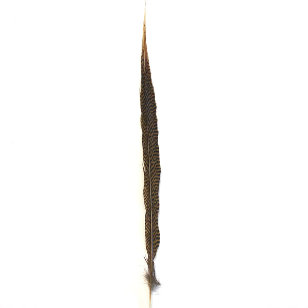 "20"" to 30"" Golden Pheasant Side Tail Feather - Natural"