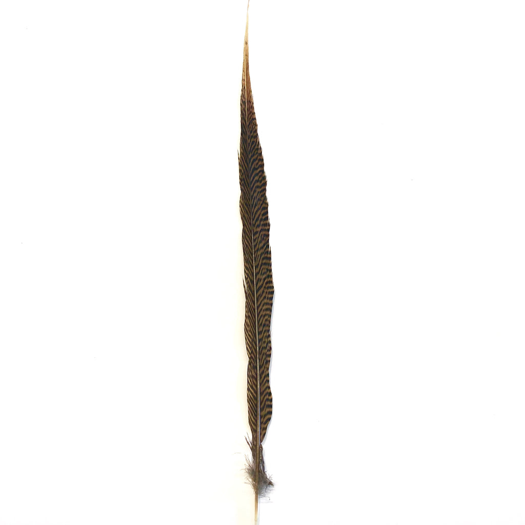 "20"" to 30"" Golden Pheasant Side Tail Feather - Natural ((SECONDS))"