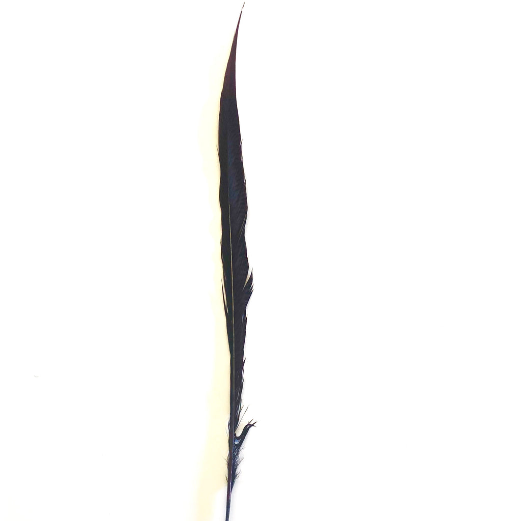 "10"" to 20"" Golden Pheasant Side Tail Feather - Chocolate Brown ((SECONDS))"