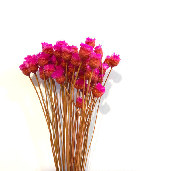 Natural Dry Mini Happy Flower Stems - Cerise