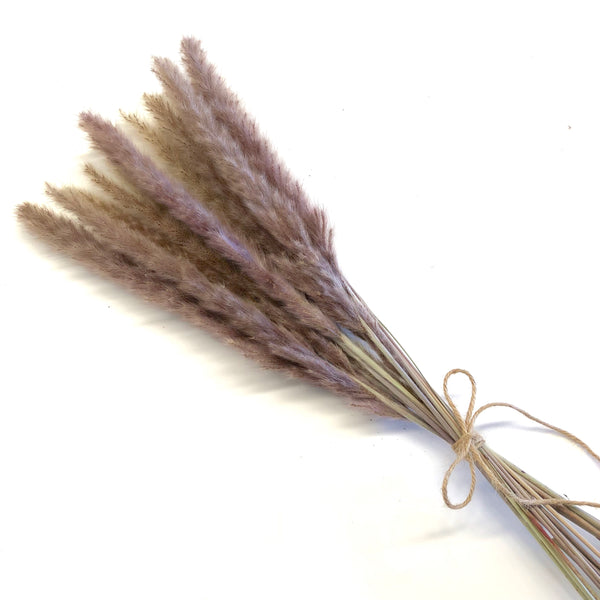 Dried Reed Blady Flower Grass Stem 45-60cm - Brown