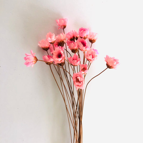 Natural Dry Mini Daisy Flower Stems - Pink