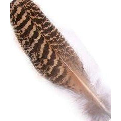 Natural Mottled Peacock Wing Small Pack of 10