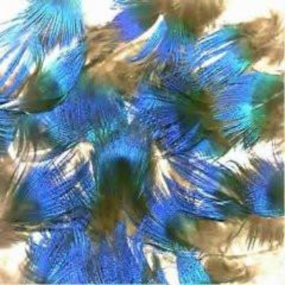 Natural Blue Peacock Feather Plumage - 5 grams ((BULK PACK))