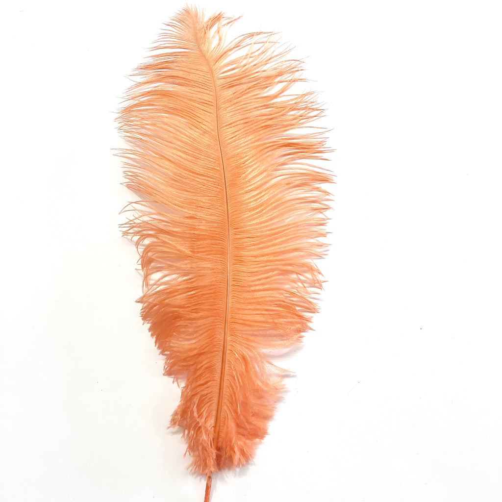 Ostrich Drab Feather 27-32cm - Apricot *Seconds* Pack of 5