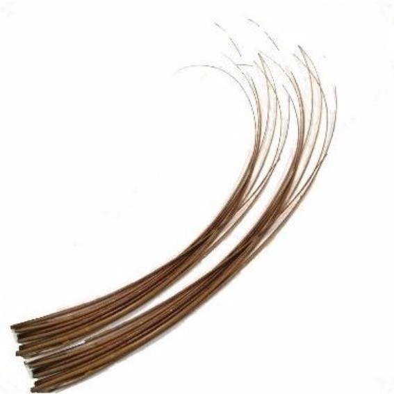 Ostrich Feather Quill Spine Barb - Tan