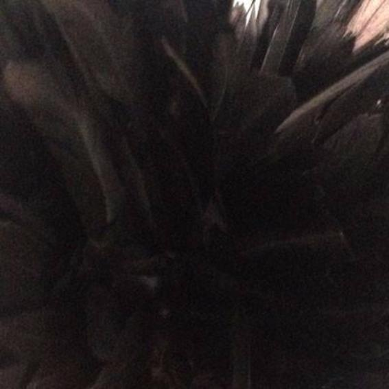 Stripped Coque Tail Feathers 10 grams - Black