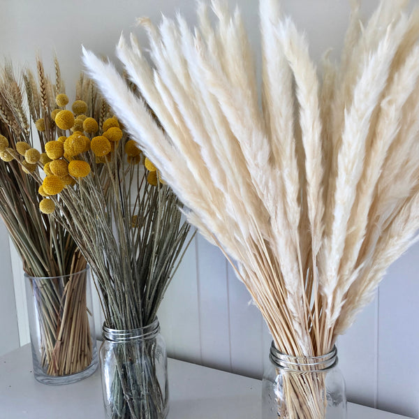 Dried Reed Blady Flower Grass 60-70cm Stem - Natural Ivory