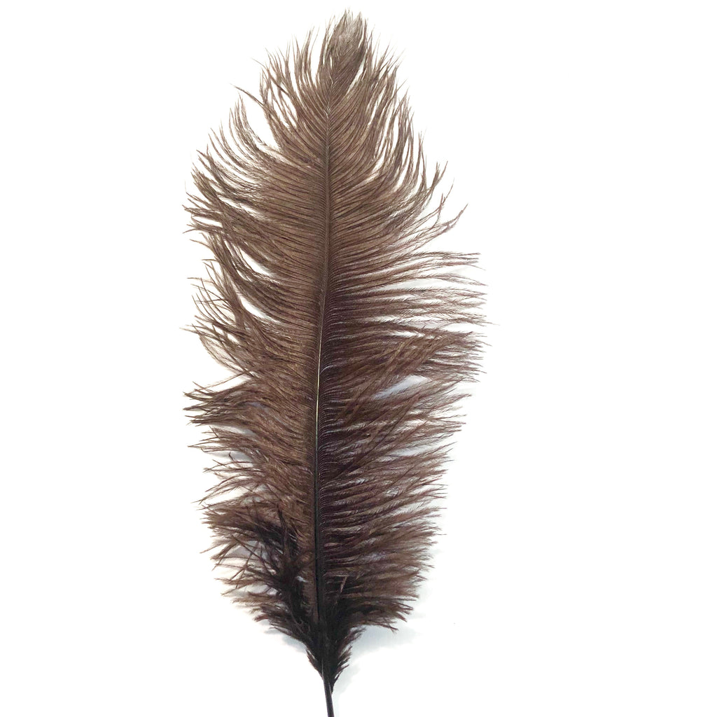 Ostrich Drab Feather 27-32cm - Chocolate Brown