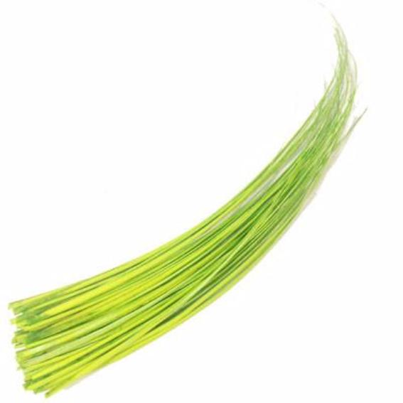 Ostrich Feather Quill Spine Barb - Citrus