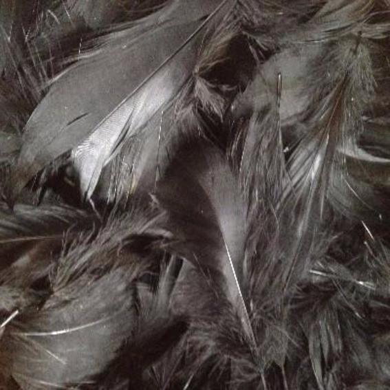 Goose Coquille Feathers 100 grams - Black