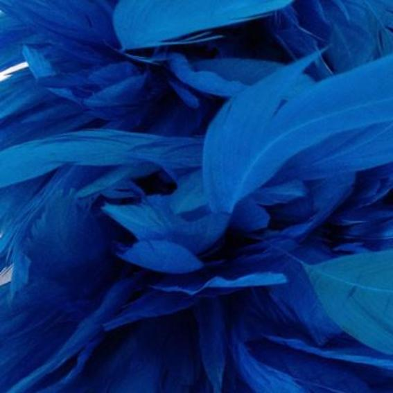Stripped Coque Tail Feathers 10 grams - Turquoise