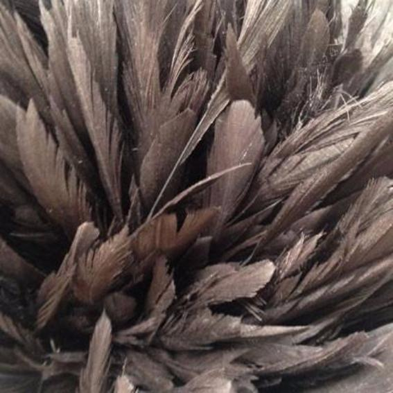 Stripped Coque Tail Feathers 10 grams - Chocolate Brown