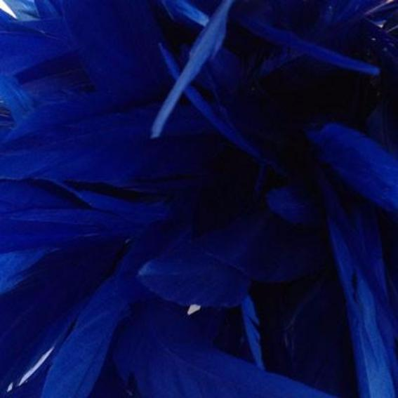 Stripped Coque Tail Feathers 10 grams - Royal Blue