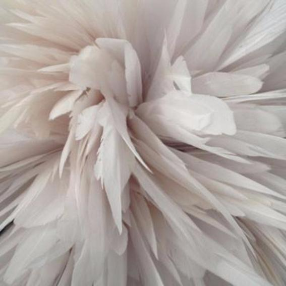 Stripped Coque Tail Feathers 10 grams - White