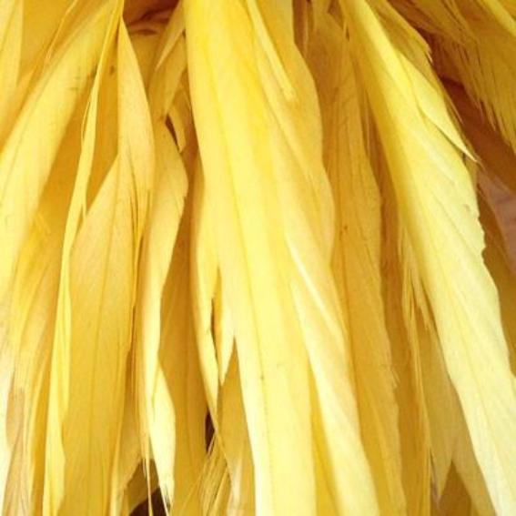 Stripped Coque Tail Feathers 10 grams - Yellow