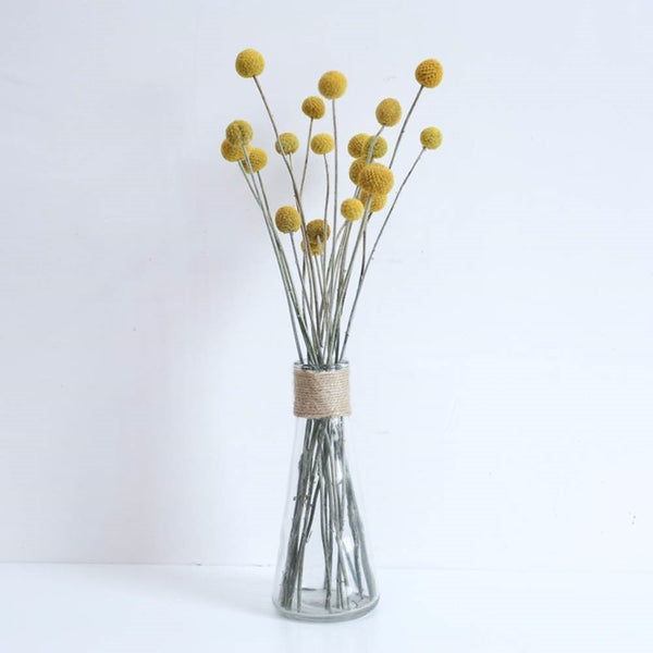 Australian Native Natural Dried Craspedia Billy Button Flower Stem - NATURAL Yellow
