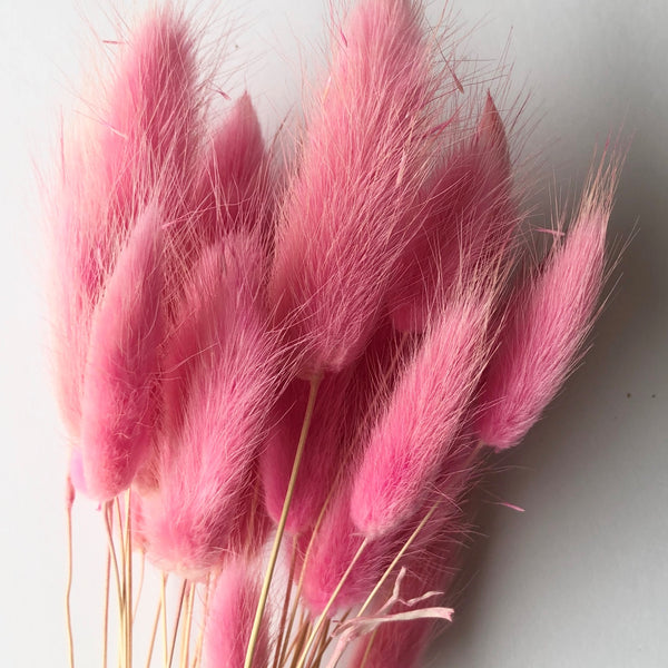 Natural Dried Rabbit Tail Grass Flower Stem Bunch - Candy Pink
