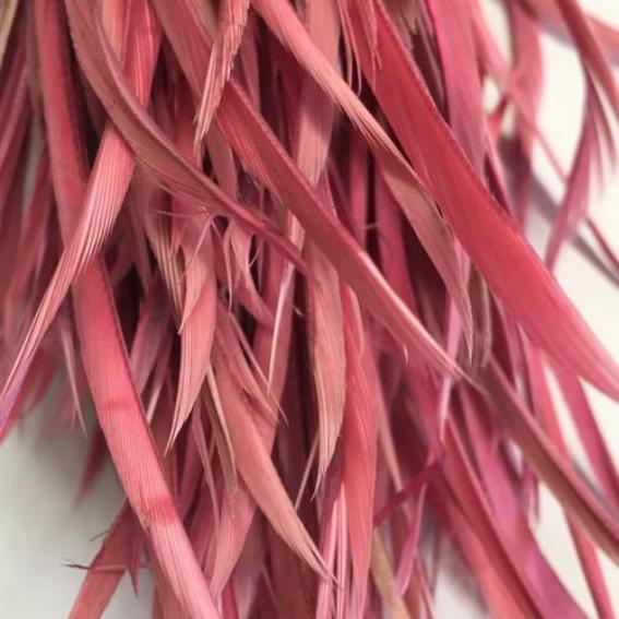 Dusty Pink Biots Pack of 10 gram