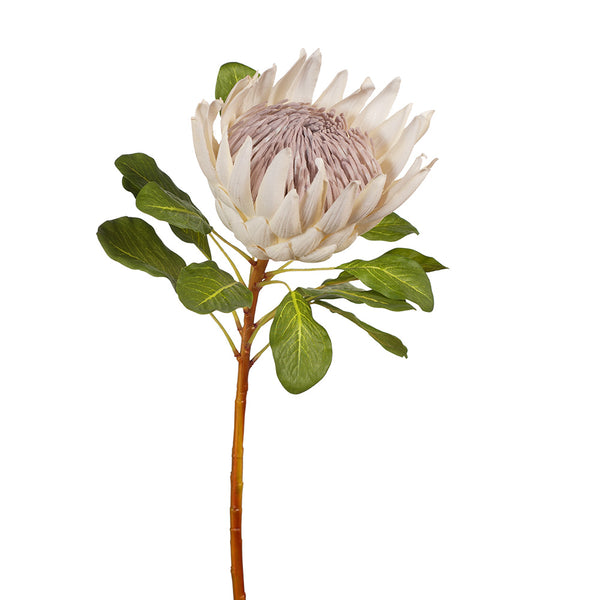 Artificial Australian Native Protea King Flower Stem - Cream (Style 1)