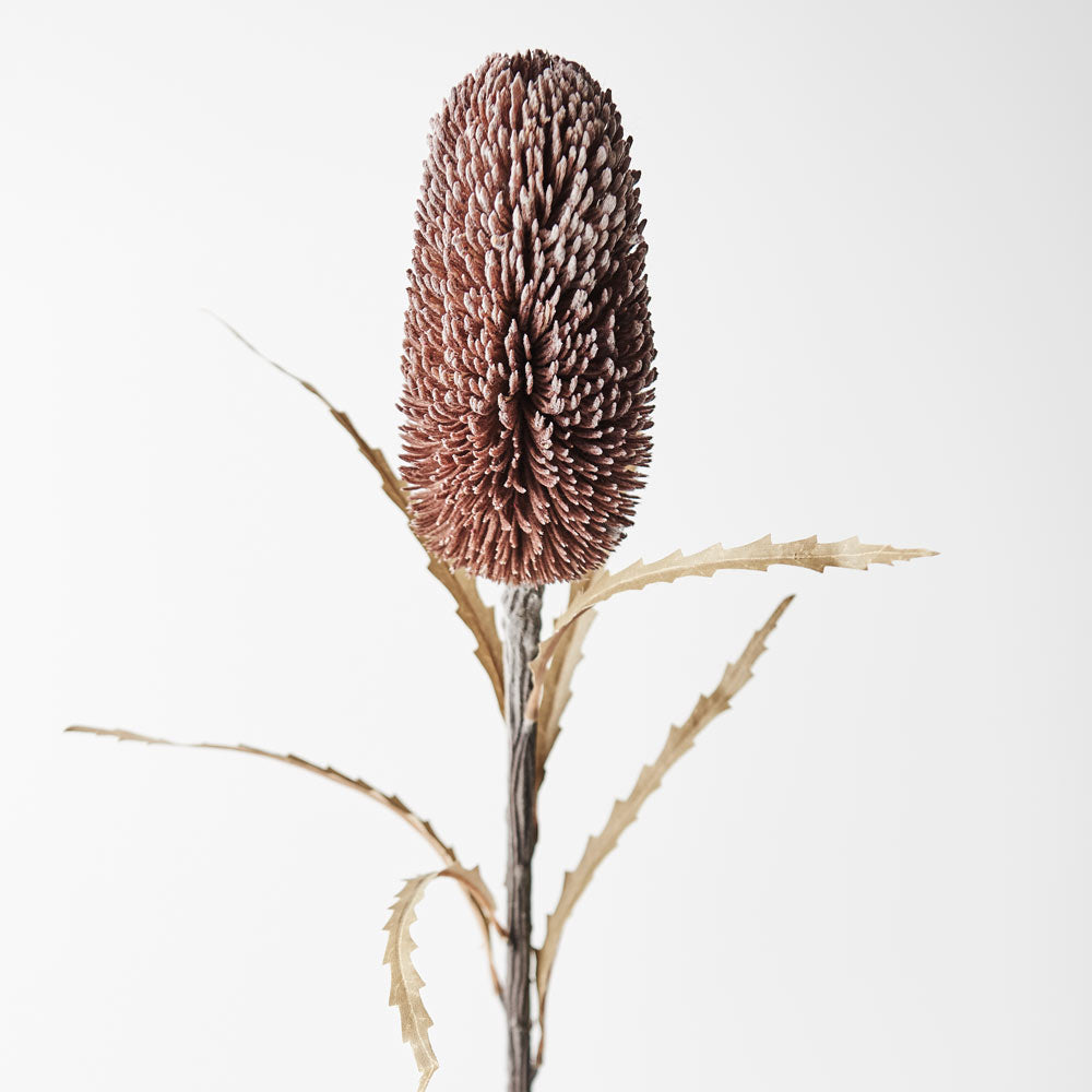 Artificial Australian Native Sawtooth Banksia Praemorsa Flower Stem - Chocolate Brown (Style 3)