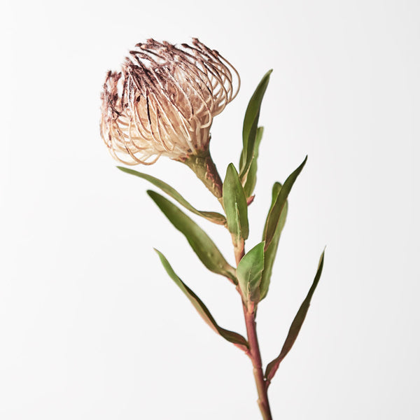 Artificial Australian Native Silk Protea Leucospermum  Flower Stem - Coffee (Style 10)