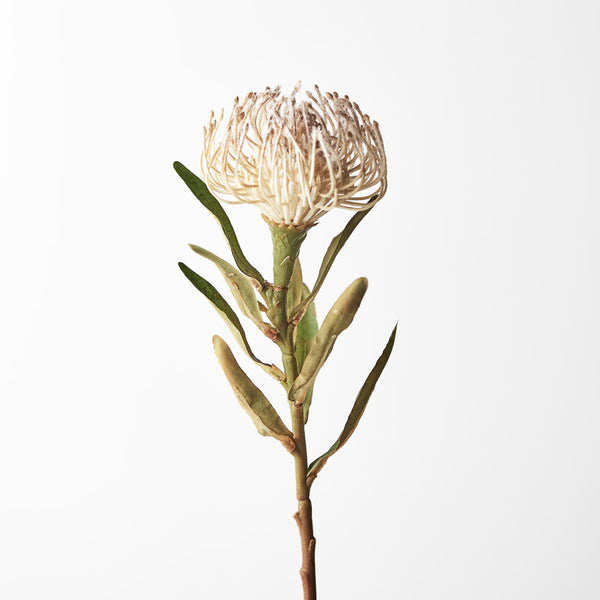 Artificial Australian Native Silk Protea Leucospermum  Flower Stem - Cream (Style 11)