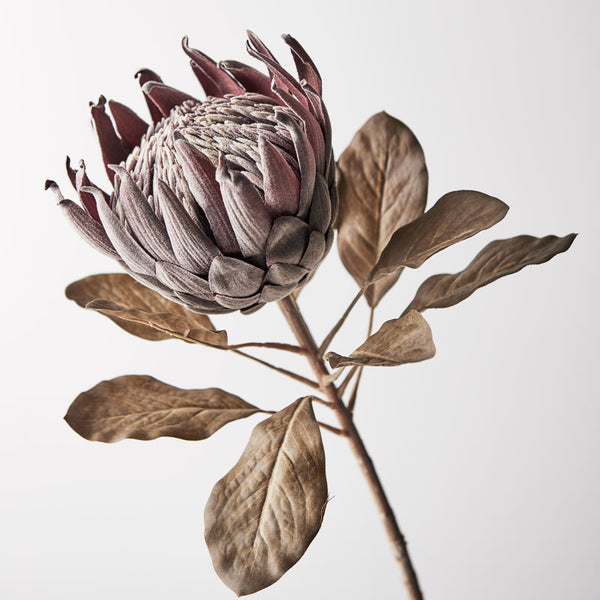 Artificial Australian Native Protea King Flower Stem - Chocolate Brown (Style 5)