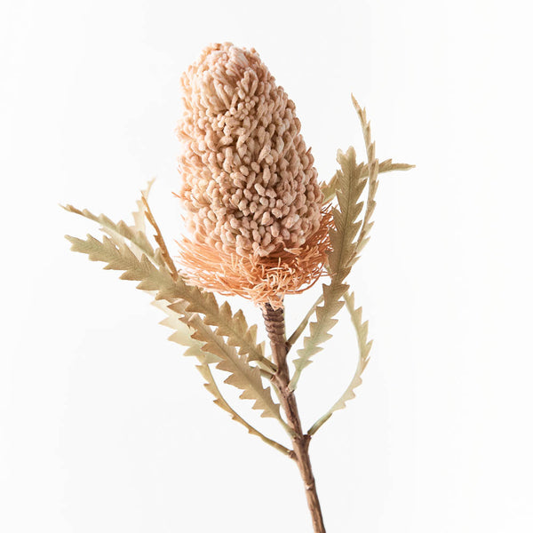 Artificial Australian Native  Banksia Acorn Flower Stem - Cream (Style 7)