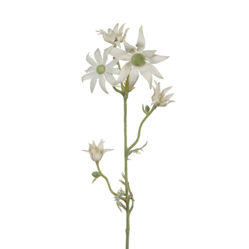 Artificial Australian Native Flannel Flower Spray - Cream Green