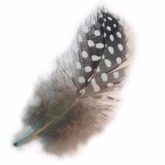 Guinea Plumage Feathers 10 grams - Mint Green