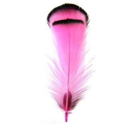 Hot Pink Silver Amherst Pheasant Plumage