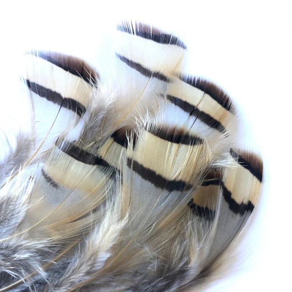 Natural Chukar Partridge Feather Plumage x 10 pcs