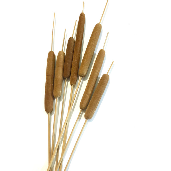 Artificial Dry Spike Of Cattail Bulrush Stem - Brown