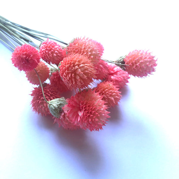 Natural Dried Gomphrena Globosa Flower Stem Bunch - Strawberry Pink