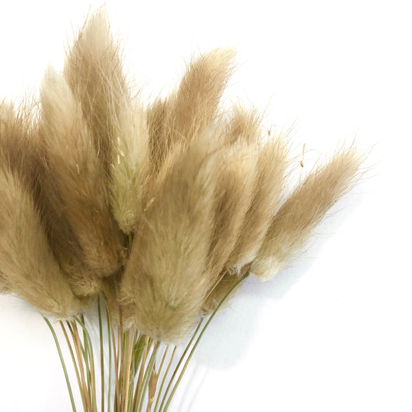 Natural Dried Rabbit Tail Grass Flower Stem Bunch - Brown