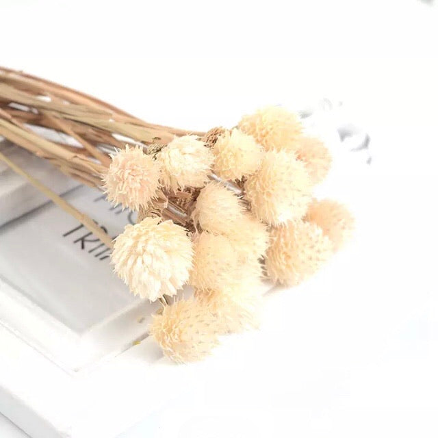 Natural Dried Gomphrena Globosa Flower Stem Bunch - Natural White