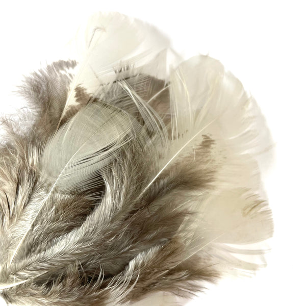 Natural Grey White Pheasant Feather Plumage x 10 pcs