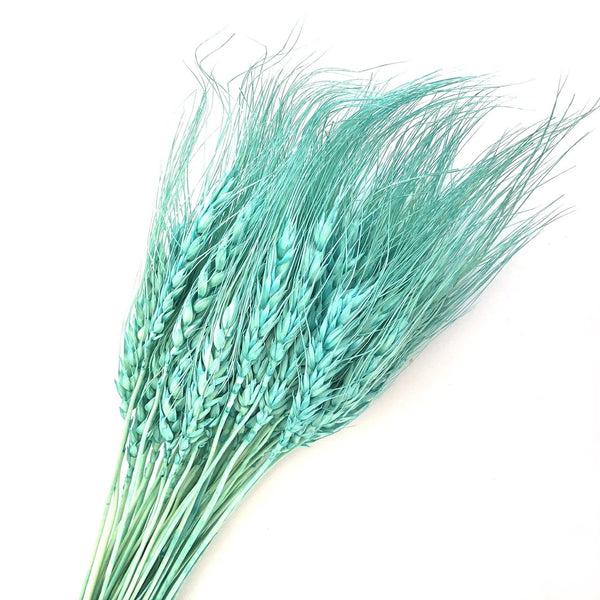 Natural Dry Wheat Grass Stalk Stems x 10 pcs - Aqua Blue