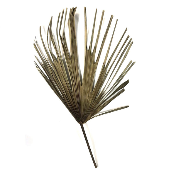 Natural Dry Palm Fan Frond Leaf Stem 45cm - Style 5