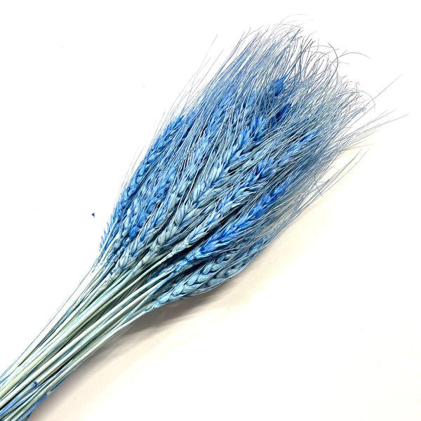 Natural Dry Wheat Grass Stalk Stems x 10 pcs - Blue